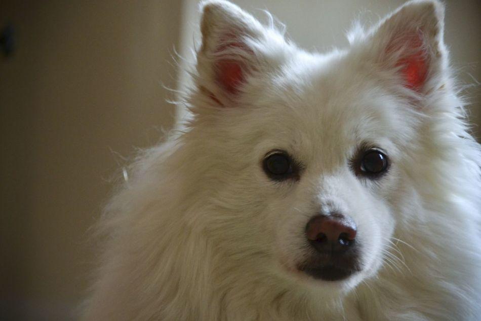 Beautiful stock photos of white, Animal Face, Animal Hair, Animal Head, Animal Themes