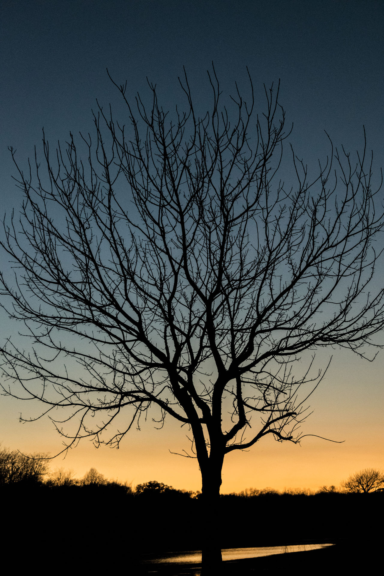 tree at sunset Astronomy Bare Tree Beauty In Nature Branch Day Idyllic Low Angle View Nature No People Outdoors Scenics Silhouette Sky Sunset Sunset Silhouettes Tranquil Scene Tranquility Tree Tree At Dusk