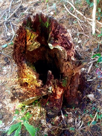 Critterspace Critter Love Critter Rest Stop Critter Home Critter Hotel Critterless Stump Nature Textured  No People Close-up Day Outdoors Tree Trunk KYUSHU Japan Photography