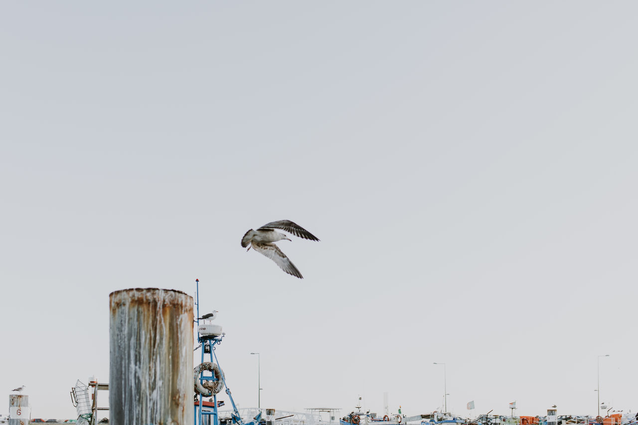 Bird Low Angle View Animal Wildlife No People One Animal Flying Animals In The Wild Outdoors Animal Themes Nature Sky Day Clear Sky Cityscape City Sea Flying High