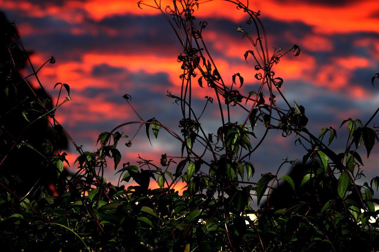 Cloud - Sky Dusk Growth My Back Garden Nature Orange Color Plant Scenics Selective Focus Sky Sunderland Sunset The Sky Is Burning