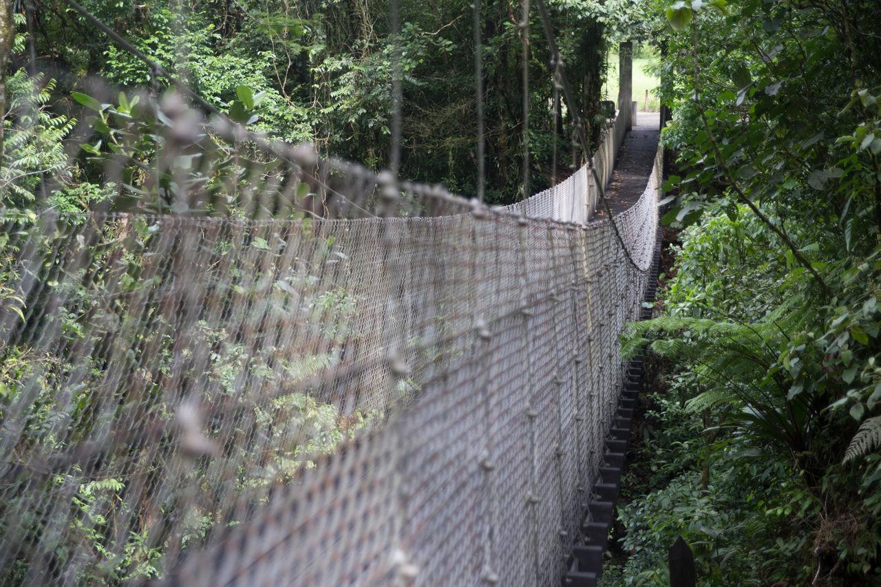 Beautiful stock photos of rainforest, Bush, Connection, Day, Footbridge