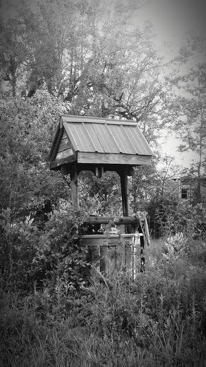 Make a wish Blackandwhite Photography Leaves And Branches No People Selective Focus Summer Wishing Well