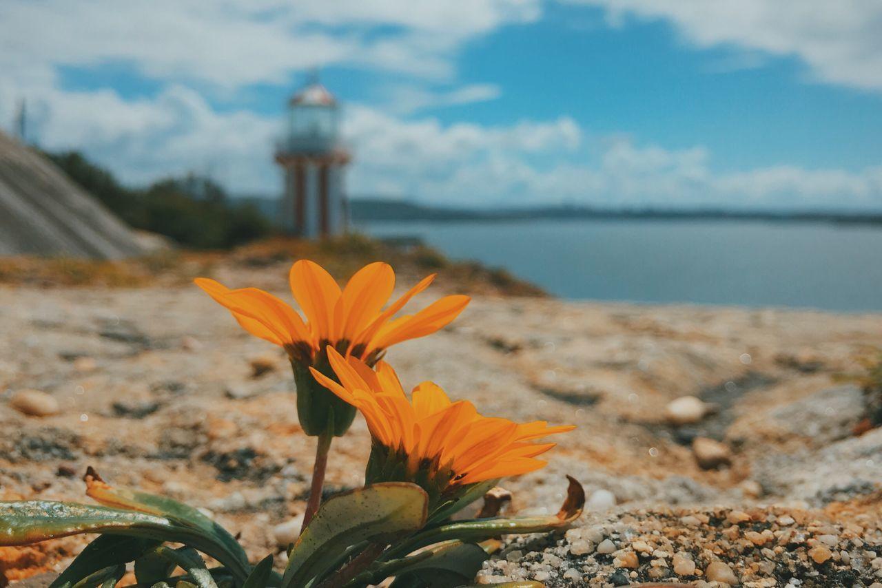 Beautiful stock photos of sydney, Australia, Beauty In Nature, Close-Up, Cloud - Sky