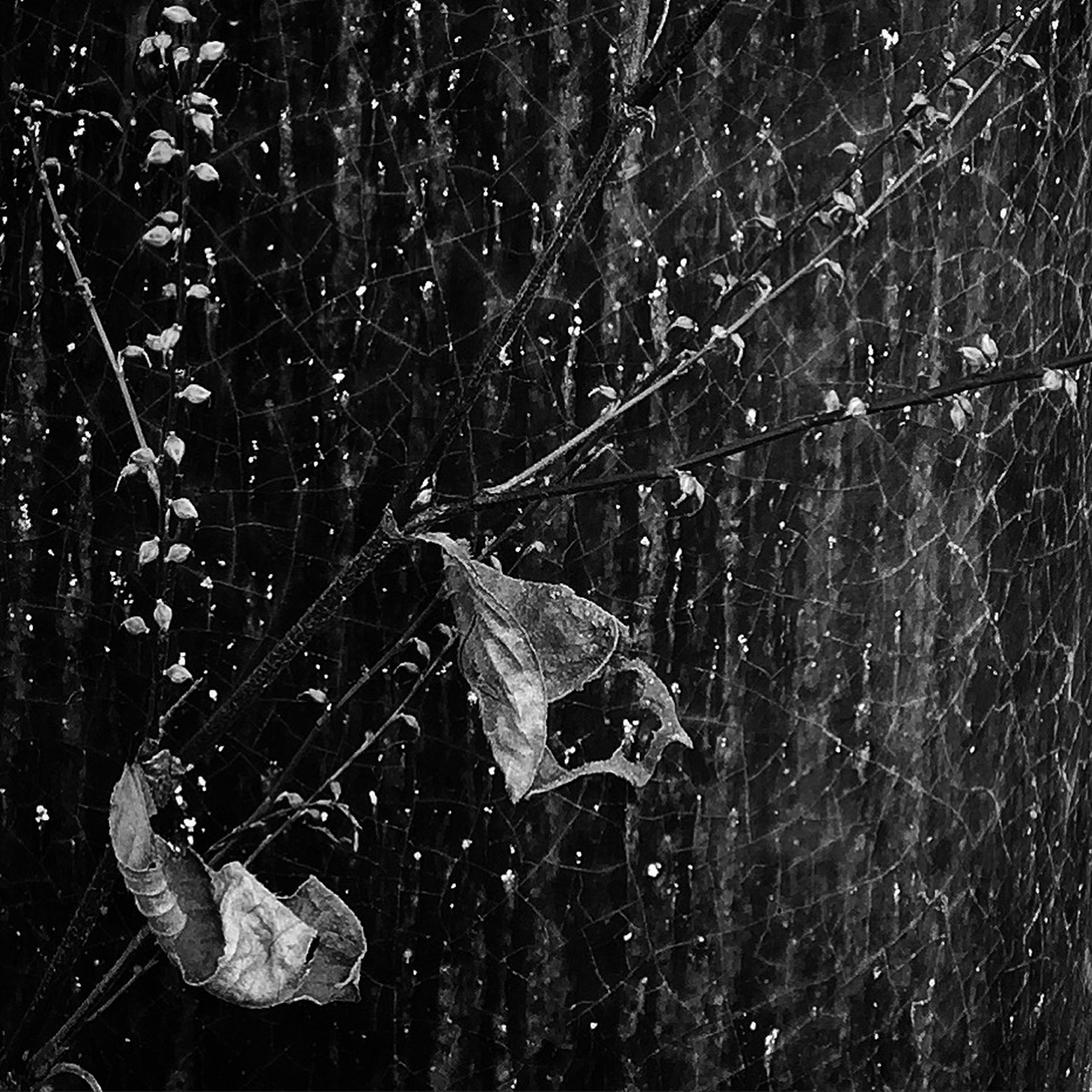 water, drop, spider web, close-up, night, wet, nature, focus on foreground, beauty in nature, motion, fragility, natural pattern, outdoors, reflection, purity, no people, splashing, dew, rain, raindrop