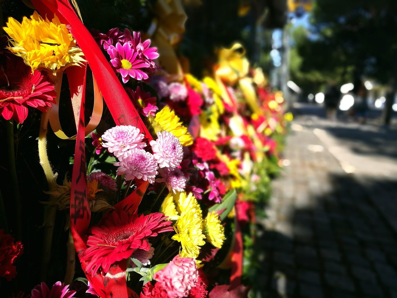 Flowers Flower Outdoors Freshness Close-up Beauty In Nature Nature Day Beautiful ♥ Autumn Flower Head Fragility