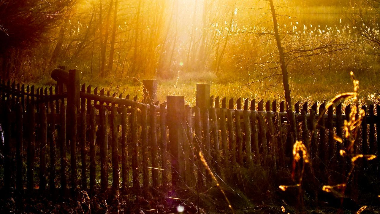 Gniezno-Dębówiec. Beautiful Nature Colors Of Autumn Farm Fence Nature In The Forest Magic Forest Magic Colours