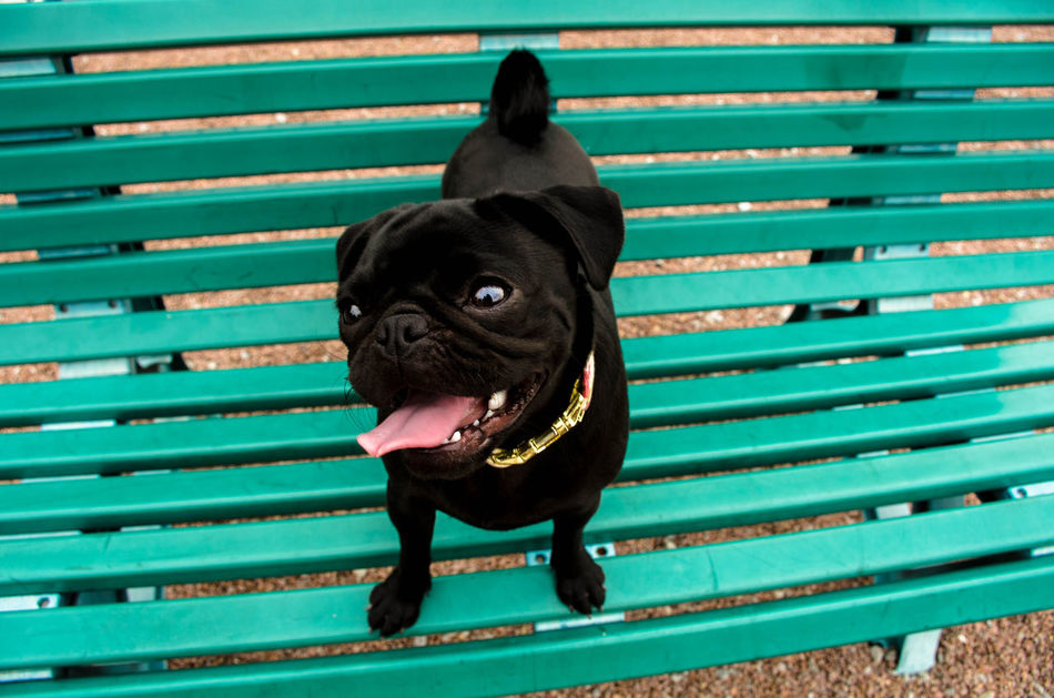 Beautiful stock photos of niedlich, Animal Themes, Bench, Black Color, Day