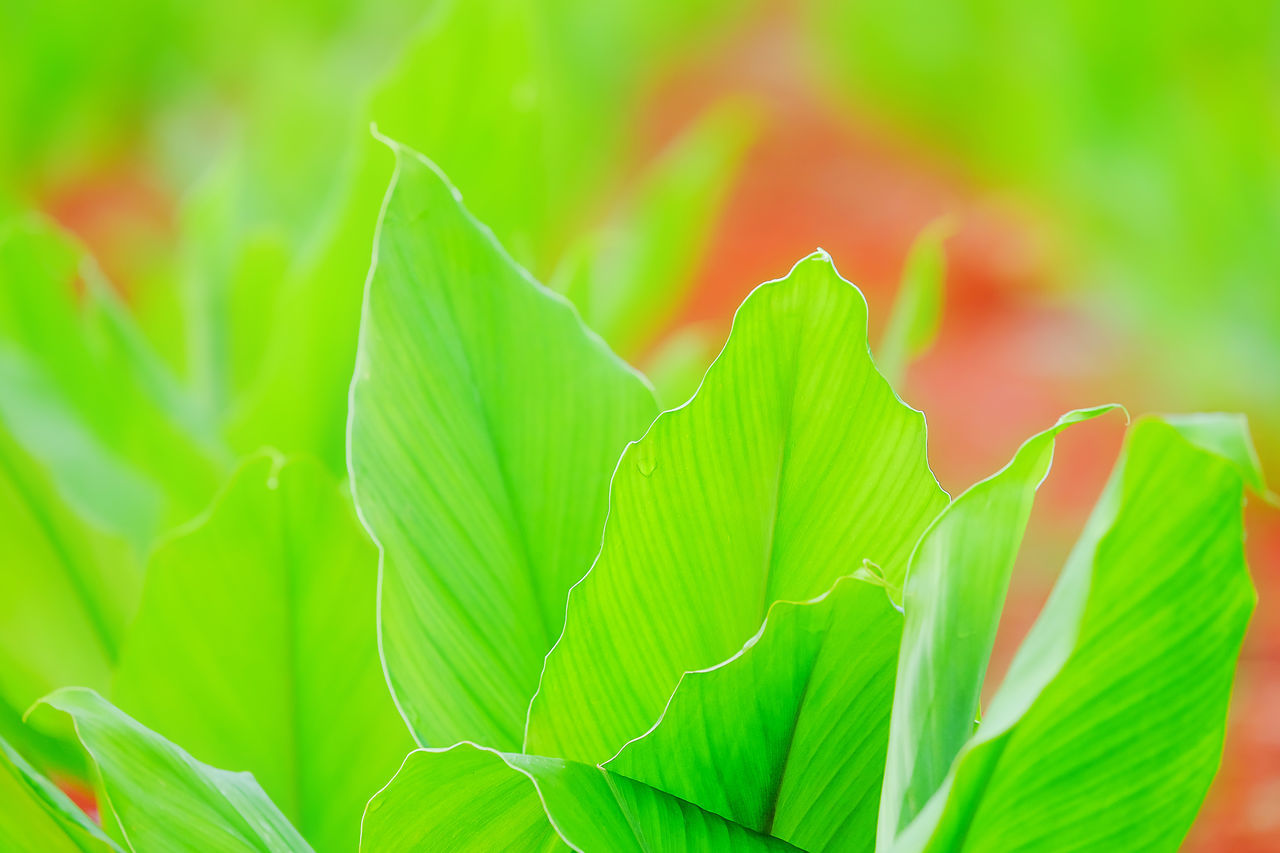 leaf, green color, plant, nature, no people, close-up, growth, beauty in nature, day, outdoors, fragility, freshness
