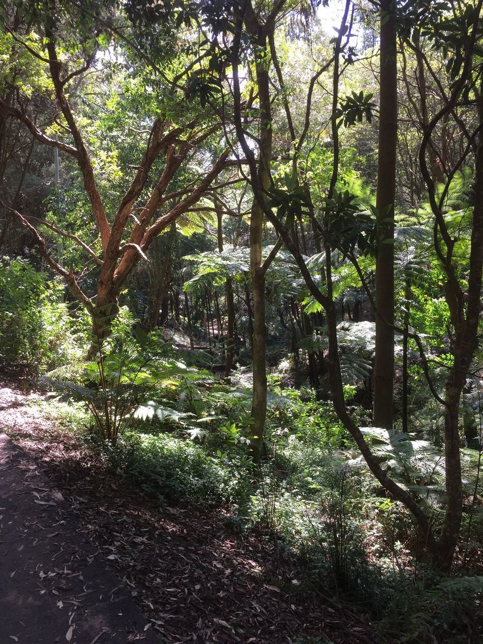 The Following into fern gully.