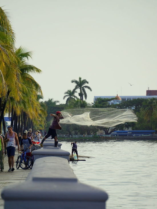 Fisherman throwing the net in Cienfuegos. Cienfuegos Cienfuegos, Cuba Clear Sky Cuba Day Fish Fisherman Footpath Leisure Activity Lifestyles Men Net Outdoors Palm Tree Palm Trees Person The Way Forward Throw Transportation Tree