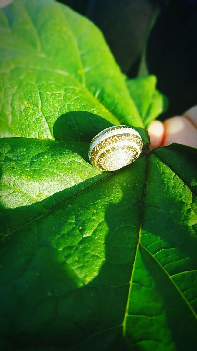 Color shifter Nature Treasure Taking Photos Outdoors Check This Out Living Bugslife Enjoying The Sun