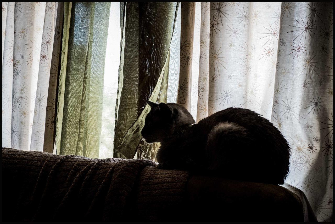 curtain, pets, animal themes, one animal, dog, domestic animals, mammal, indoors, drapes, rear view, day, window, sitting, no people