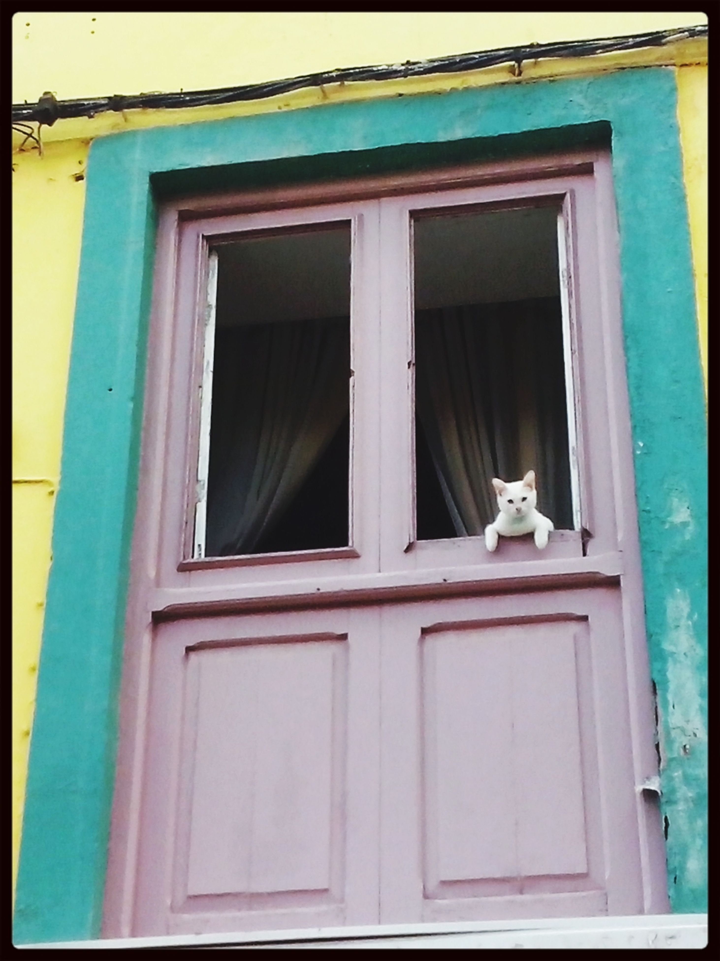 animal themes, building exterior, window, one animal, built structure, architecture, door, house, blue, closed, wildlife, bird, pets, transfer print, residential structure, domestic animals, day, animals in the wild, outdoors, residential building