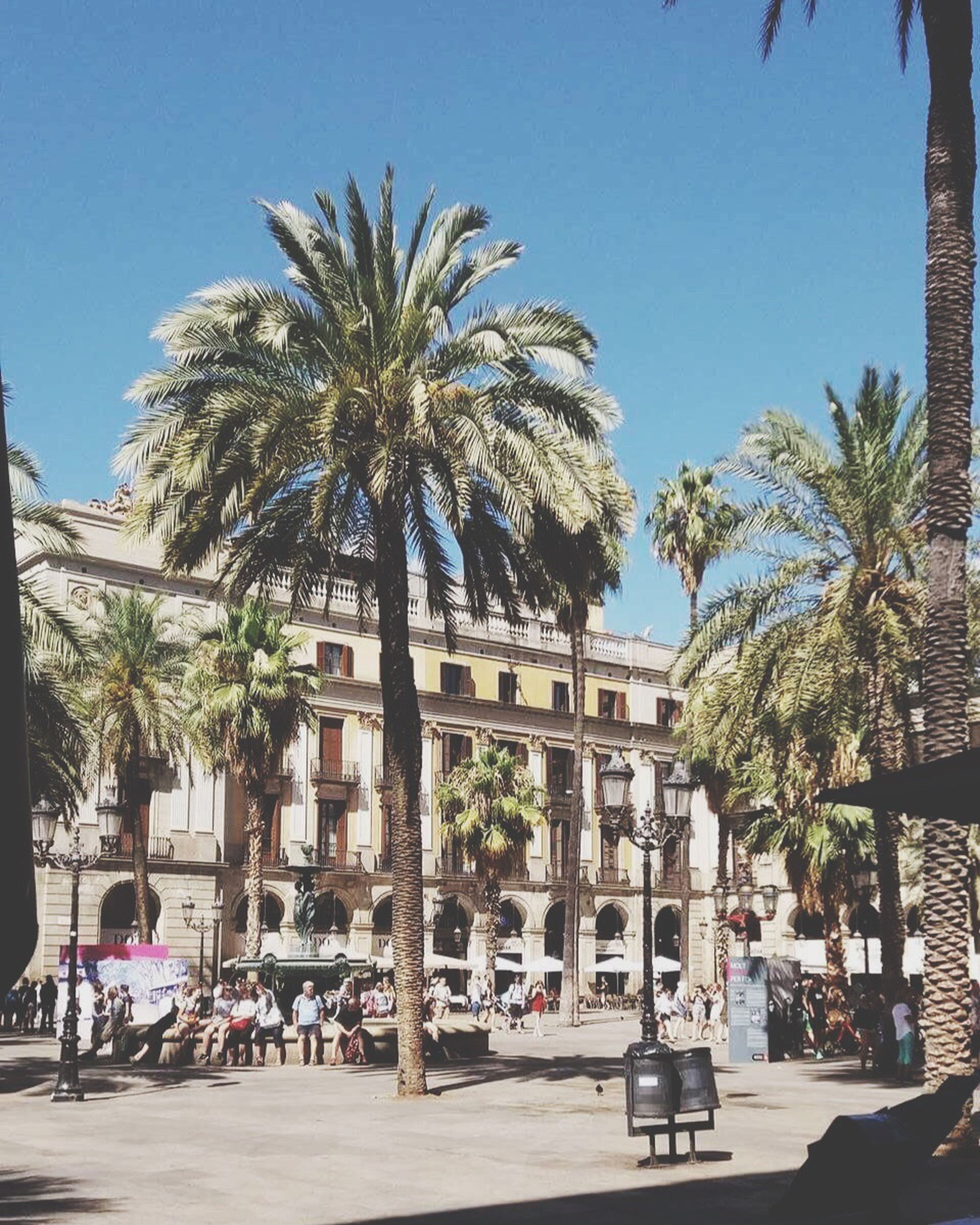 palm tree, tree, architecture, sunlight, building exterior, clear sky, street, day, built structure, outdoors, real people, large group of people, city, sky, people