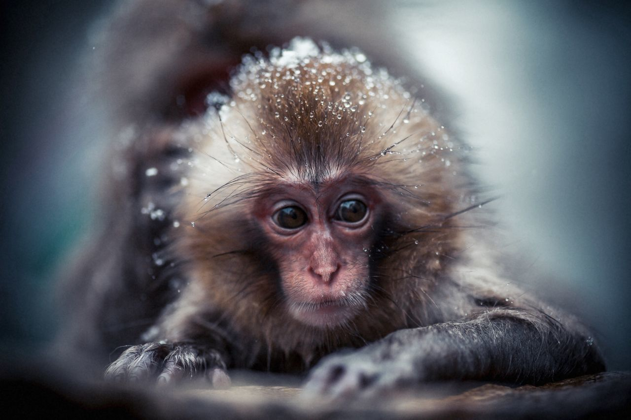 Beautiful stock photos of monkey, Animal Themes, Animals In The Wild, Close-Up, Day