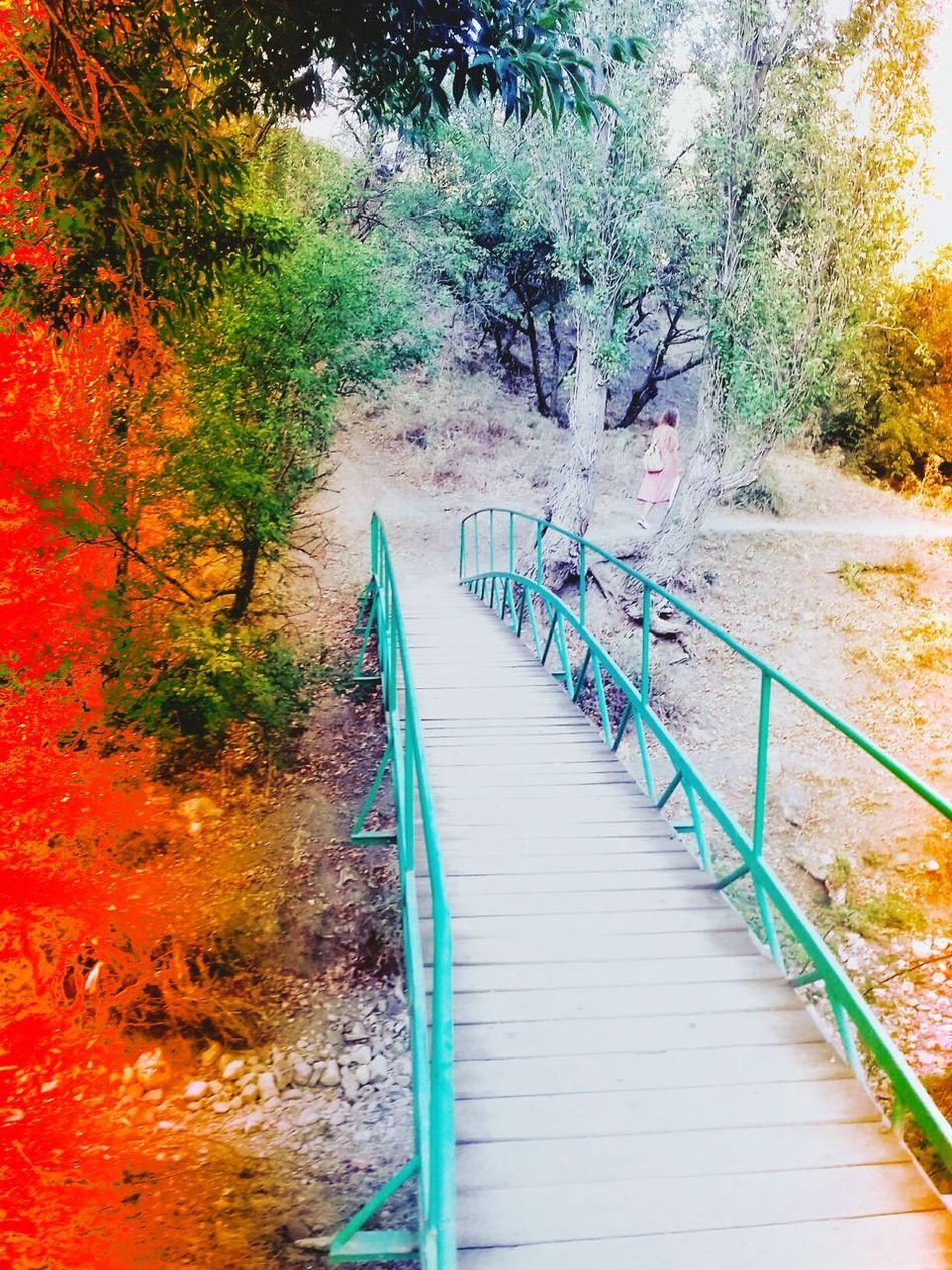 Красивый мостик