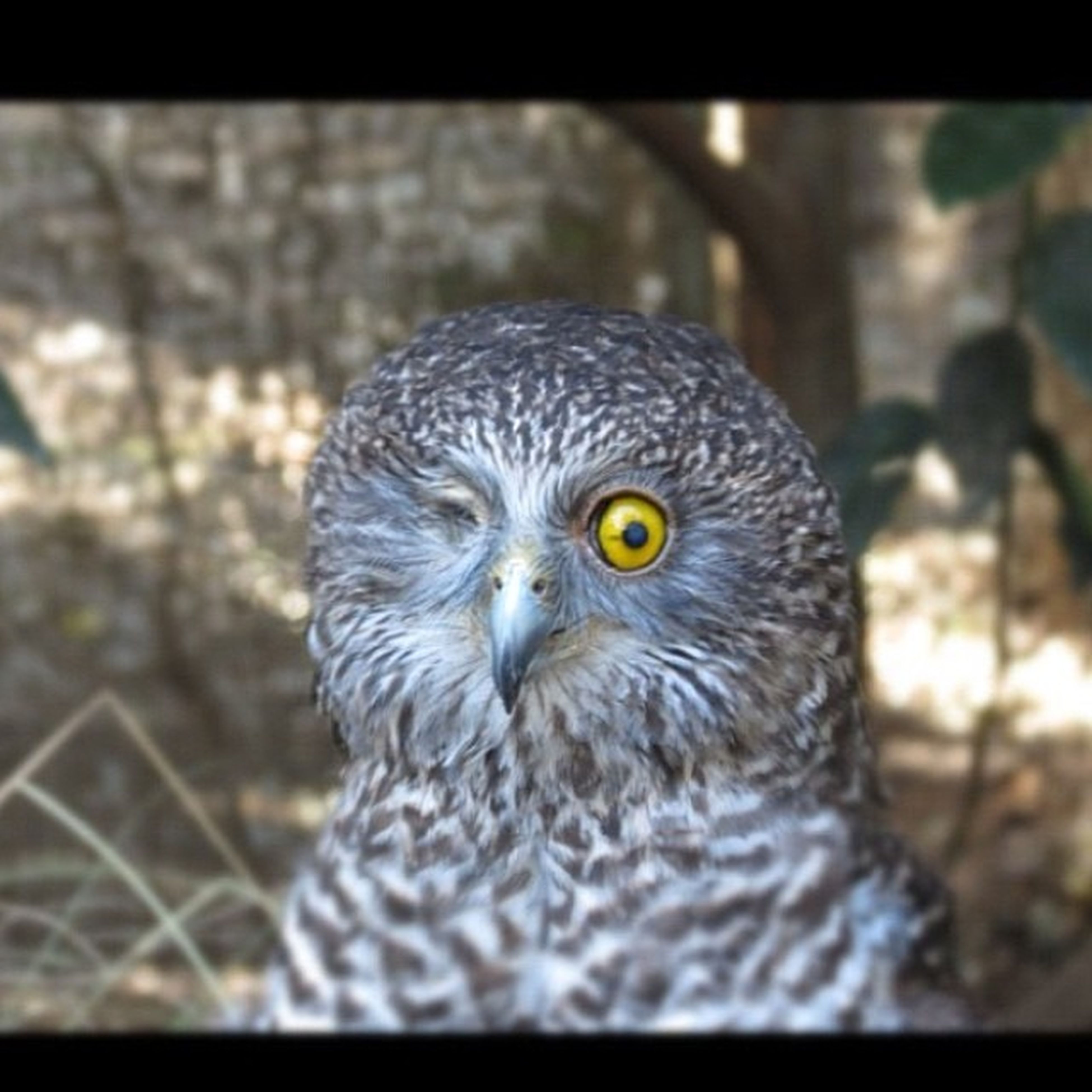 animal themes, one animal, bird, animals in the wild, wildlife, focus on foreground, close-up, owl, bird of prey, beak, animal head, portrait, looking at camera, perching, front view, nature, animal eye, outdoors, day