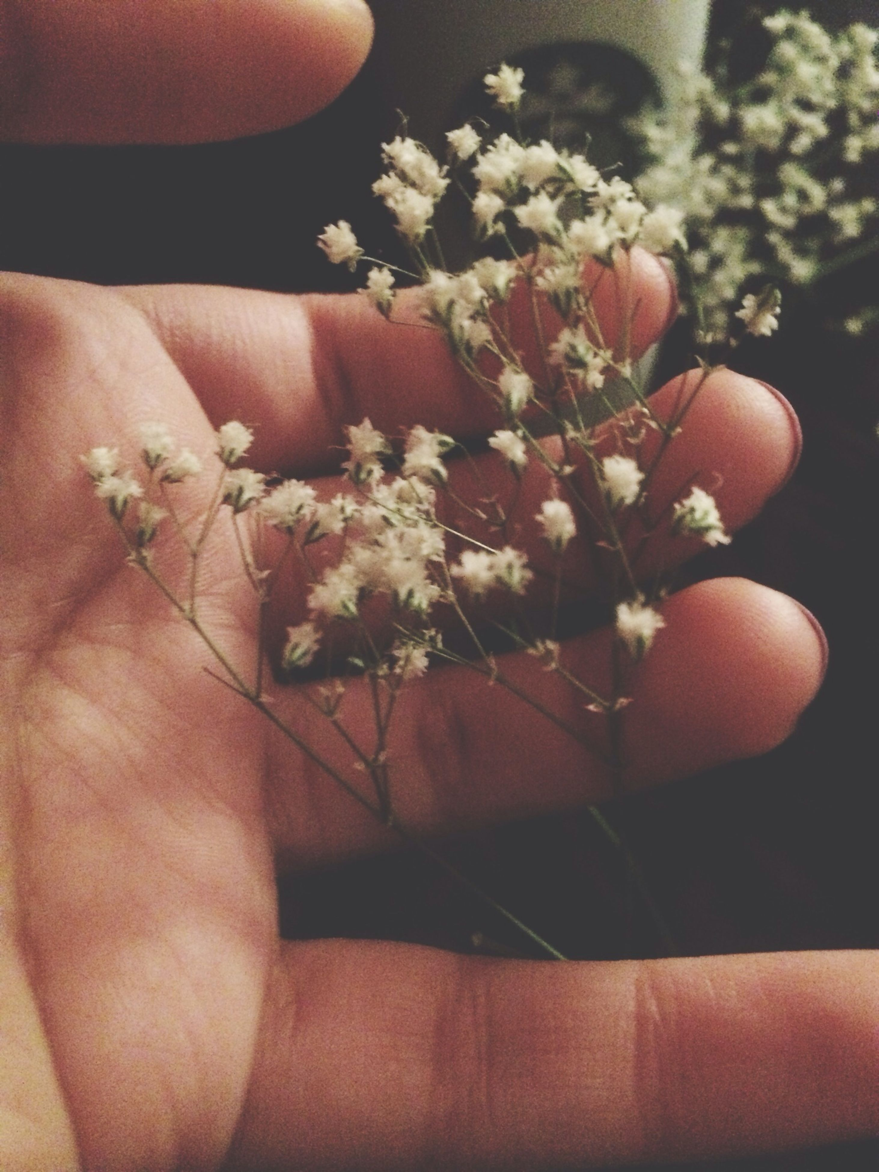 person, flower, holding, indoors, part of, freshness, fragility, cropped, human finger, close-up, unrecognizable person, personal perspective, lifestyles, petal, nature, home interior