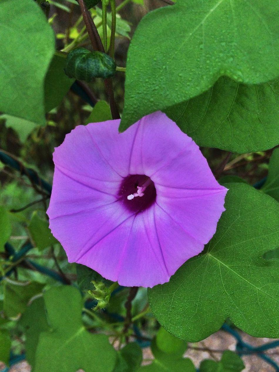Flower Mississippi
