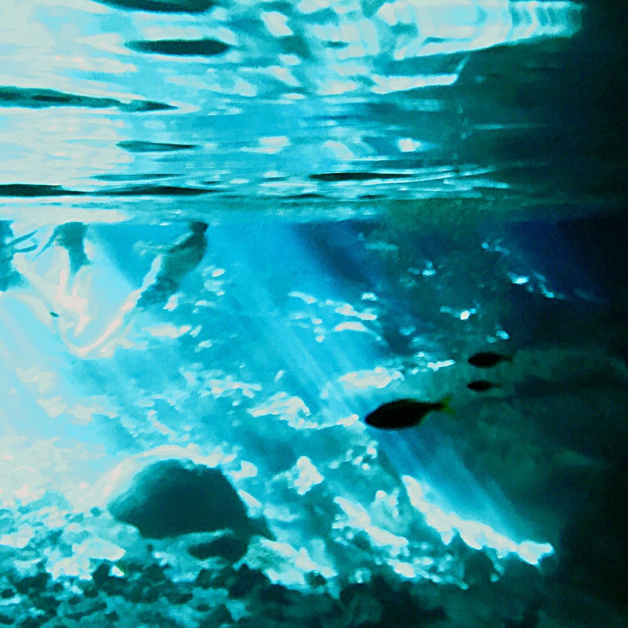 Mayan Cenotes Swimming Escaping Enjoying Life Check This Out Snorkeling Relaxing