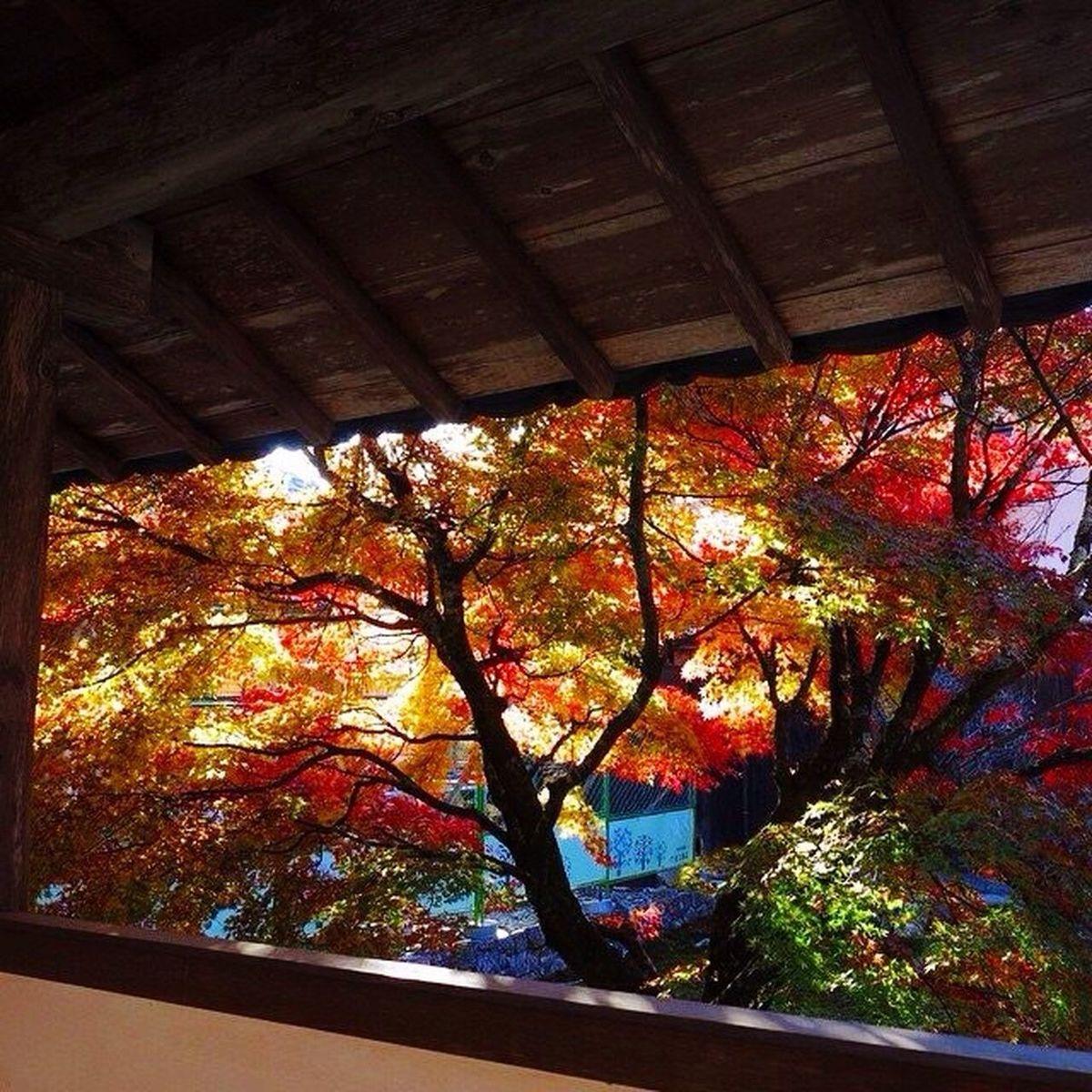 Autumn Autumn Leaves Shiga,Japan Temple 永源寺
