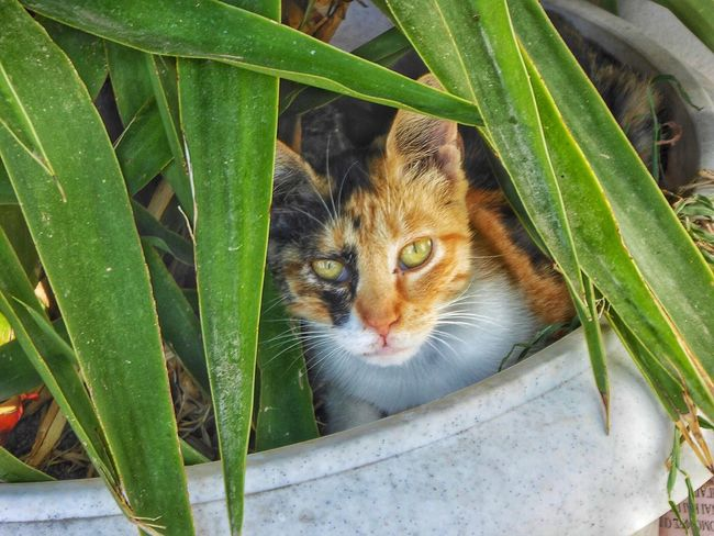 Cat Cats Cat Lovers Cat♡ Catlovers Cats 🐱 Cats Of Greece Ikaria Greece GREECE ♥♥ Dodecanese