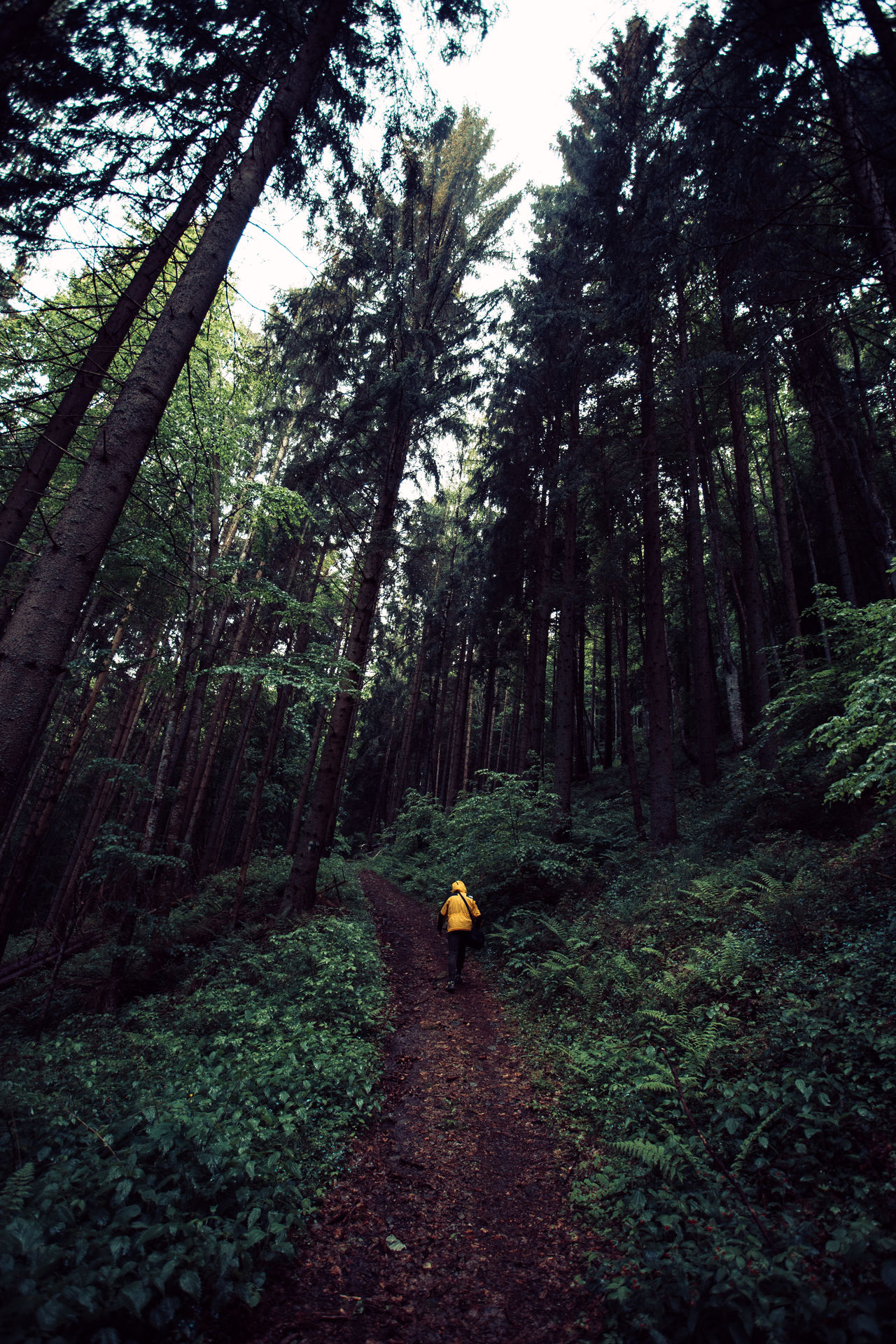 Adventure Adventures Day Exploring Forest Forest Photography Full Length Growth Hiking Landscape Nature Nature Nature Photography Nature_collection Naturelovers One Person Outdoors People Real People Trail Tranquility Tree Tree Tree Trunk Walking