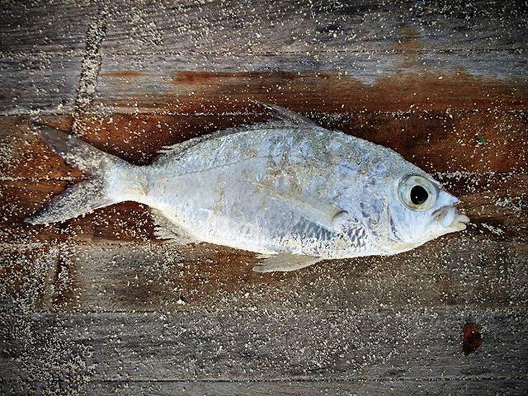 Someone else's catch of the day 😁 Catchoftheday Nothingisordinary Tropical Islandlife Fish Deck Travelgram Whatfishisthis Marinelife Liveauthentic Livenature Maldives