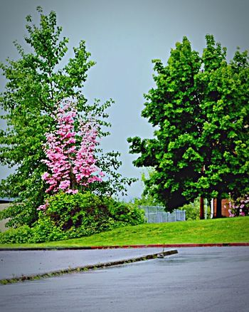 Urban Spring Fever May Showers, brighten the Pacific NW flowers 😊🌷 Spring Is In The Air Washington Farmland Colors Of Springtime Vancouver Washington 2016 Photography BucketList Notes From The Underground Spring Rainstorms Pacific Northwest Beauty