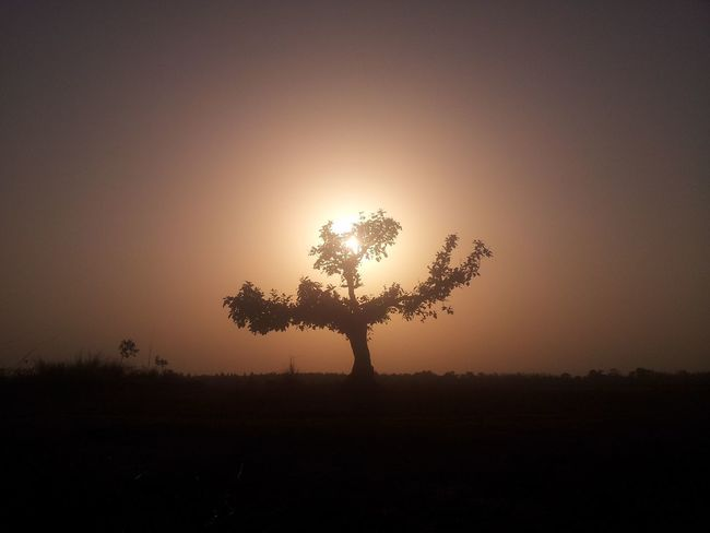 Silhouette Tree Nature Sunset Beauty In Nature Tranquility Idyllic Tranquil Scene No People Outdoors Beauty In Nature Landscape Nature Photography Landscape_Collection Landscape_photography Landscapes With WhiteWall Landscape_lovers Preschool Student Focus On Foreground