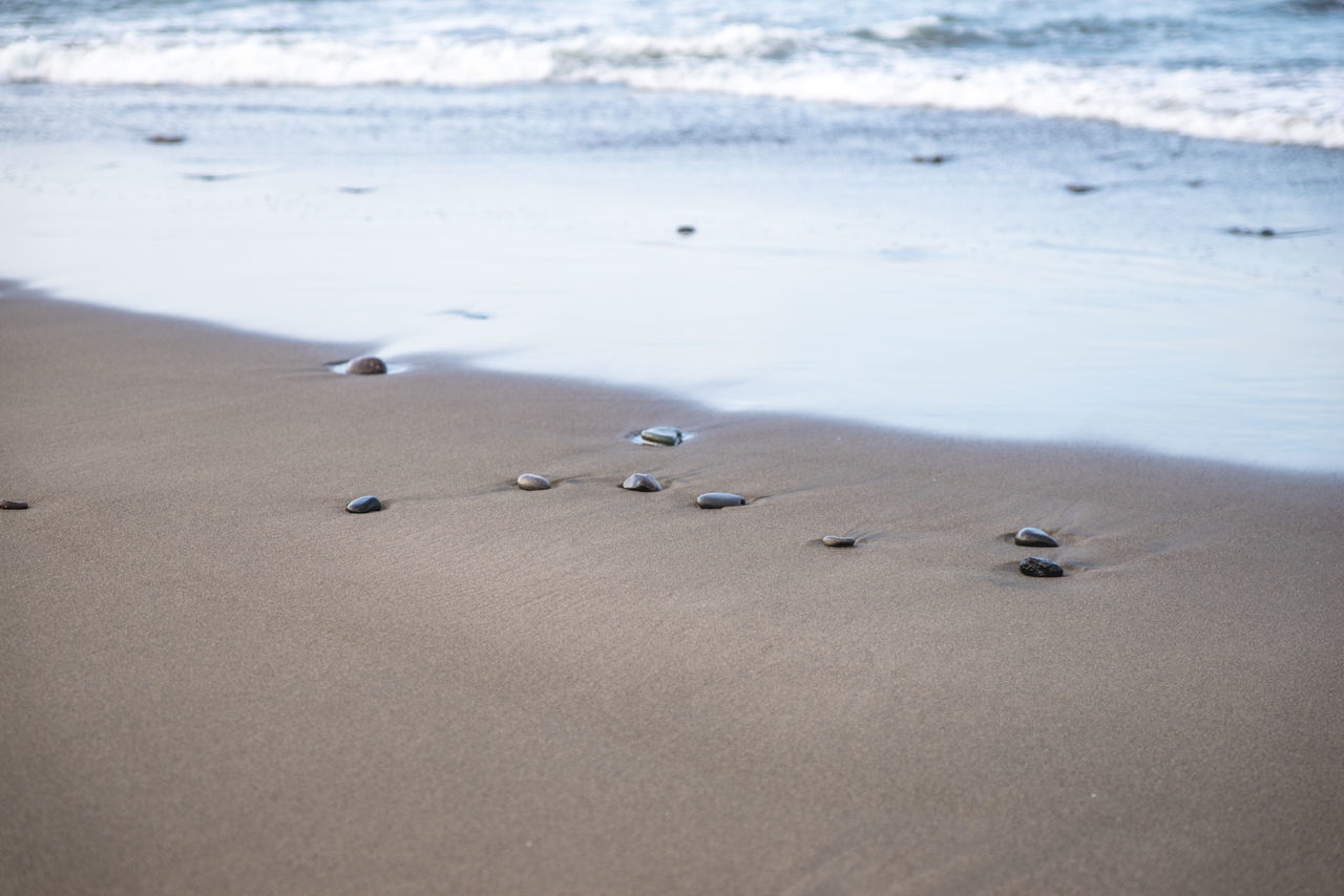Animal Themes Animals In The Wild Beach Beach Life Beach Photography Beauty In Nature Bird Day Landscape_Collection Landscape_photography Nature Nature Photography Nature_collection No People Outdoors Sand Sea Shore Water Wave Waves, Ocean, Nature Neighborhood Map