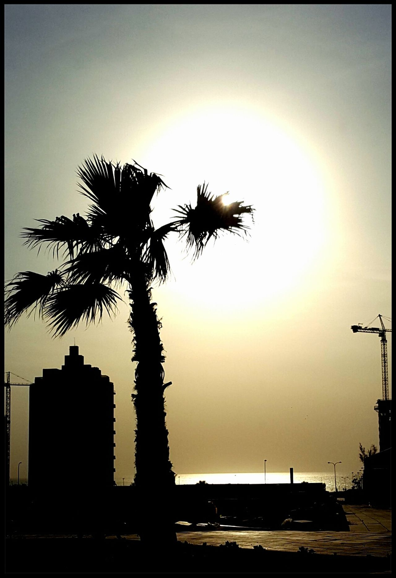 My Year My View Sunset Silhouette Branch Sea Tree Palm Tree Nature No People Outdoors Water Scenics Sky Beauty In Nature Day