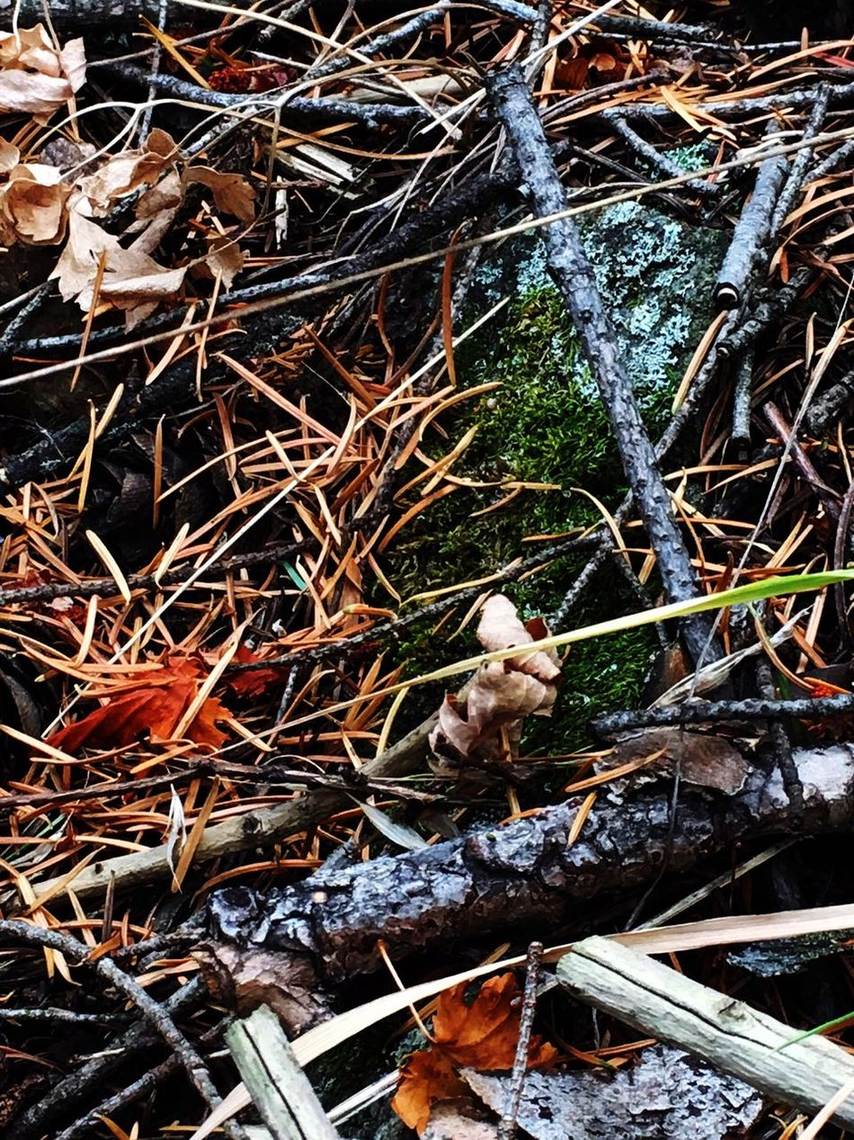 No People Outdoors Nature Autumn Lookout Mountain Denver,CO Beauty In Nature Pine Needles Leaves Leaf Bark Moss