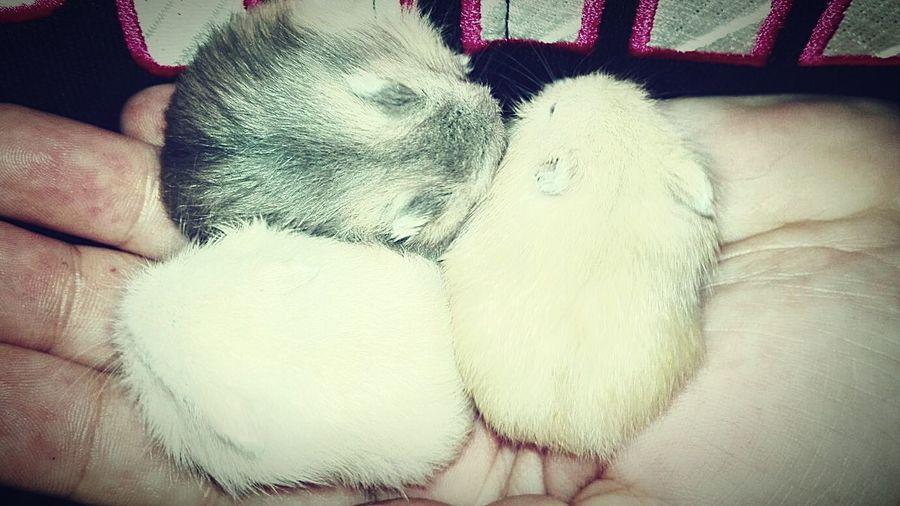 Hamsters Memory EyeEm Best Shots Littlebylittle