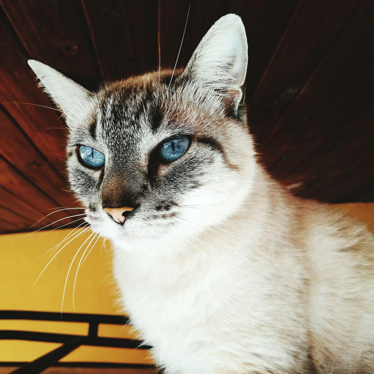 Cat cleopatra😻