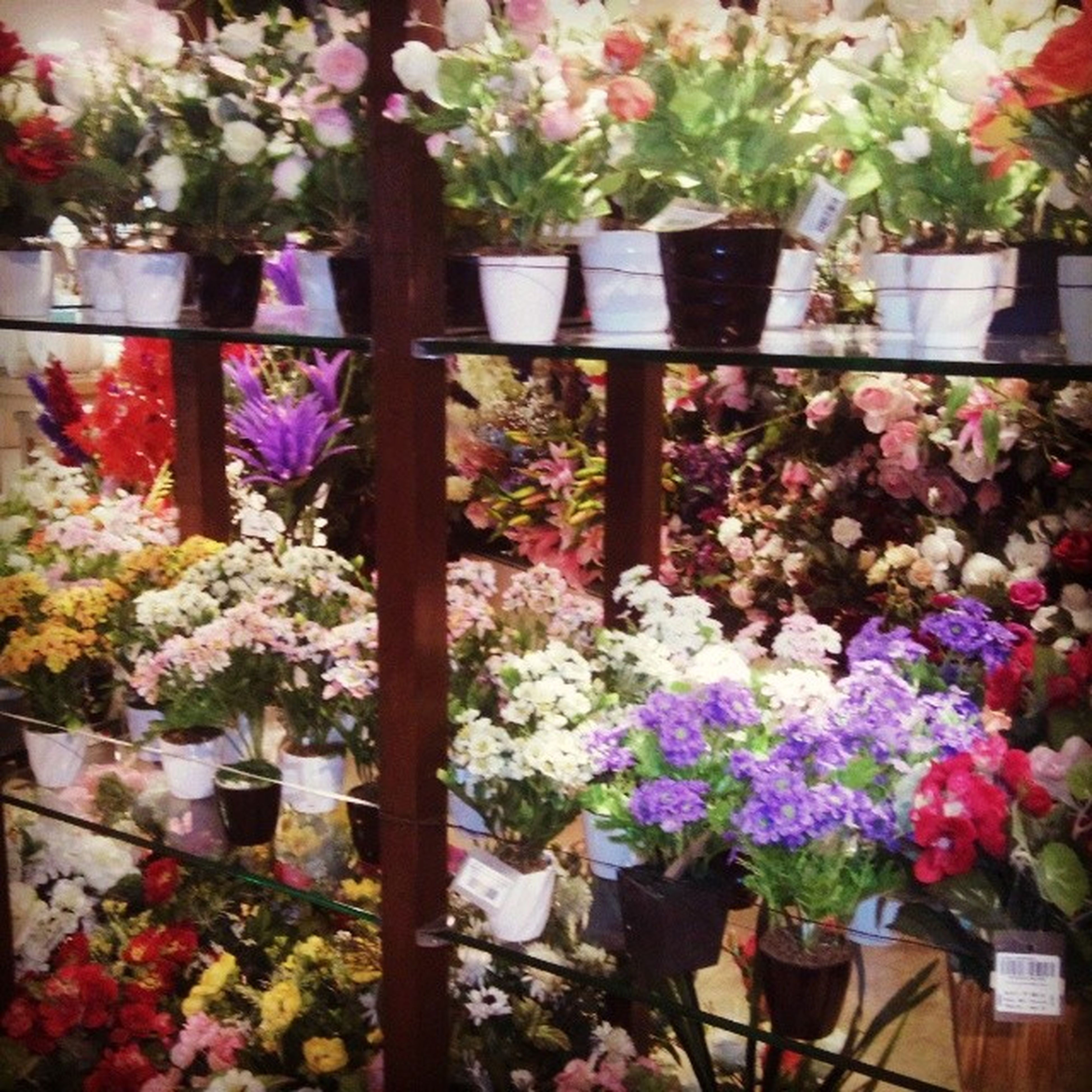 flower, freshness, variation, fragility, abundance, growth, multi colored, plant, choice, arrangement, beauty in nature, for sale, potted plant, nature, pink color, retail, petal, large group of objects, bunch of flowers, hanging