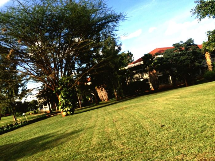 Green Check This Out Taking Photos Popular Photos Nature IPhone Edited Check This Out Africa University Campus Twinklenugz