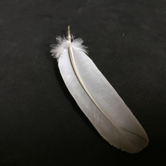 EyeEm Selects Feather  Close-up Fragility Softness Single Object No People Black Background Nature Single Solitary Monochrome Black And White Photography Black & White Natural