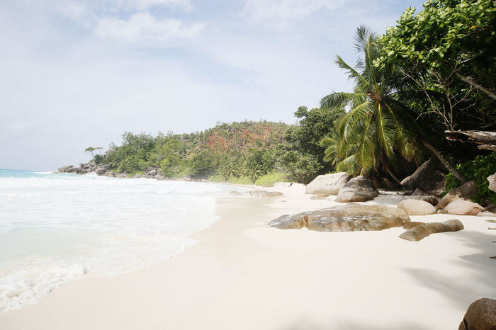 Beach Beauty In Nature Day Nature No People Outdoors Praslin Praslin Seychelles Sand Scenics Sea Seychelles Seychelles Islands Sky Tranquil Scene Tranquility Travel Destinations Travel Photography Tree Water Anse Georgette