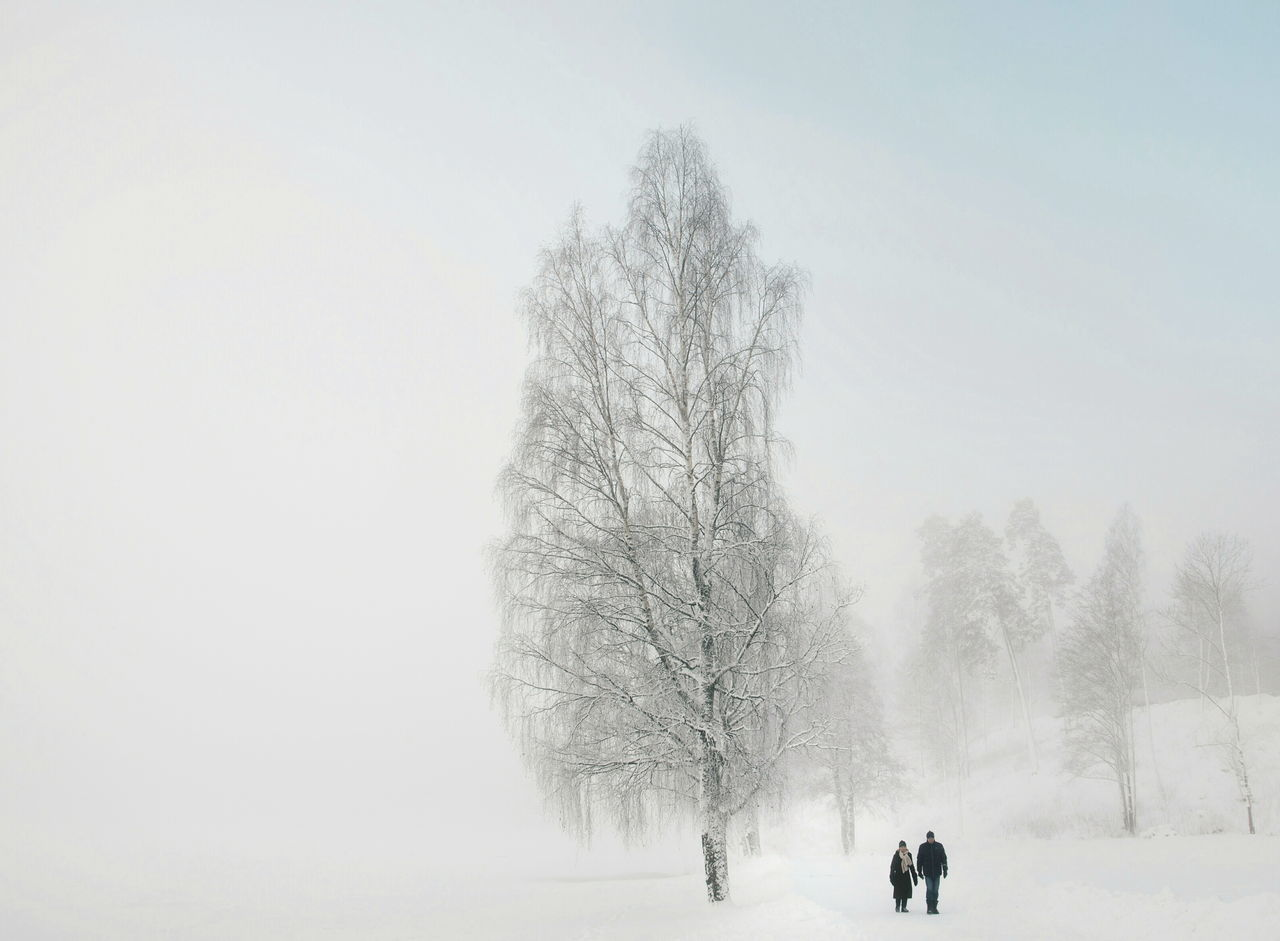 Beautiful stock photos of christmas, Beauty In Nature, Cold Temperature, Covered, Covering