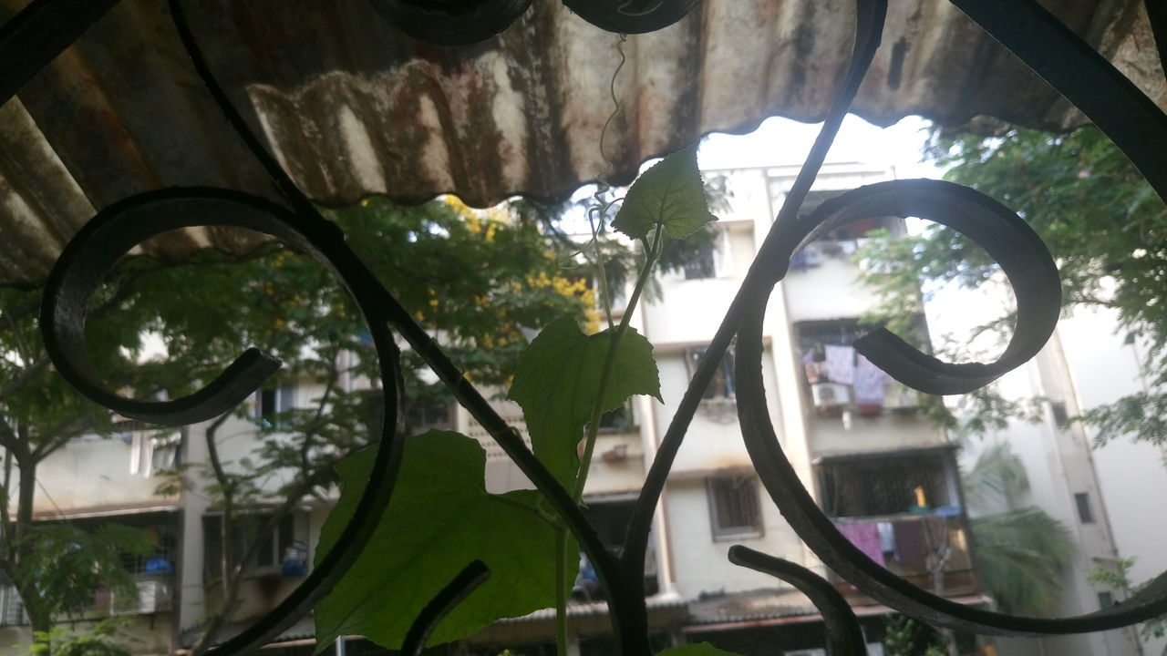 low angle view, day, no people, tree, indoors, leaf, close-up, architecture, nature
