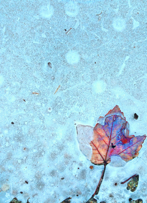 Leaf in Ice Autumn Beauty In Nature Breitling Breitling Photography Change Close-up Day Delaware Fragility High Angle View Ice Landscape_photography Leaf Nature Nature Photography No People Outdoor Photography Outdoors Outdoors Photograpghy  Winter