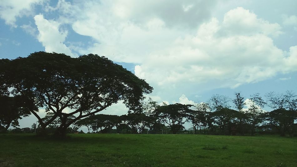 For The Love Of Trees ~ Clouds