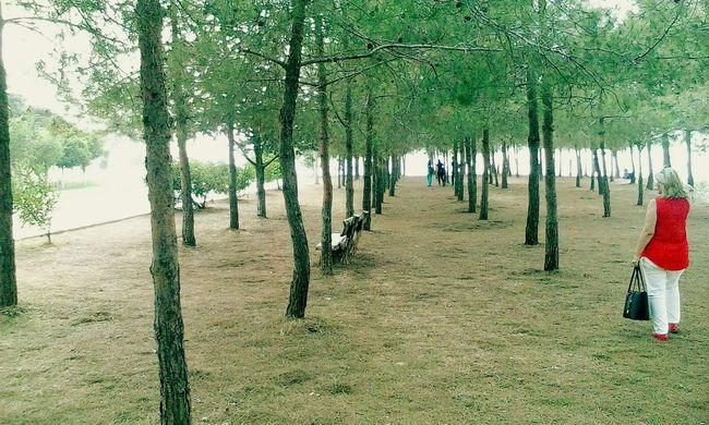 AdanaTurkey Trees Turkuaz Eyem Nature Lover Enjoying Life