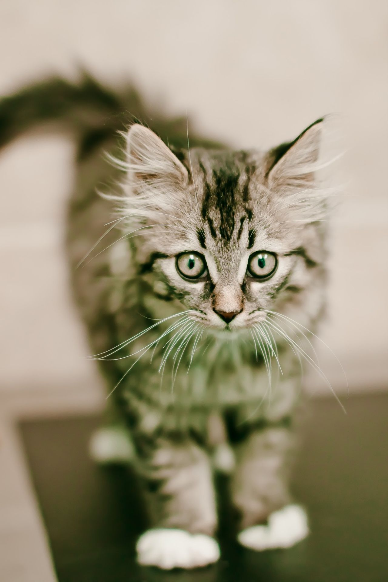 Beautiful stock photos of kitty, Animal Themes, Auto Post Production Filter, Cat, Domestic Animals