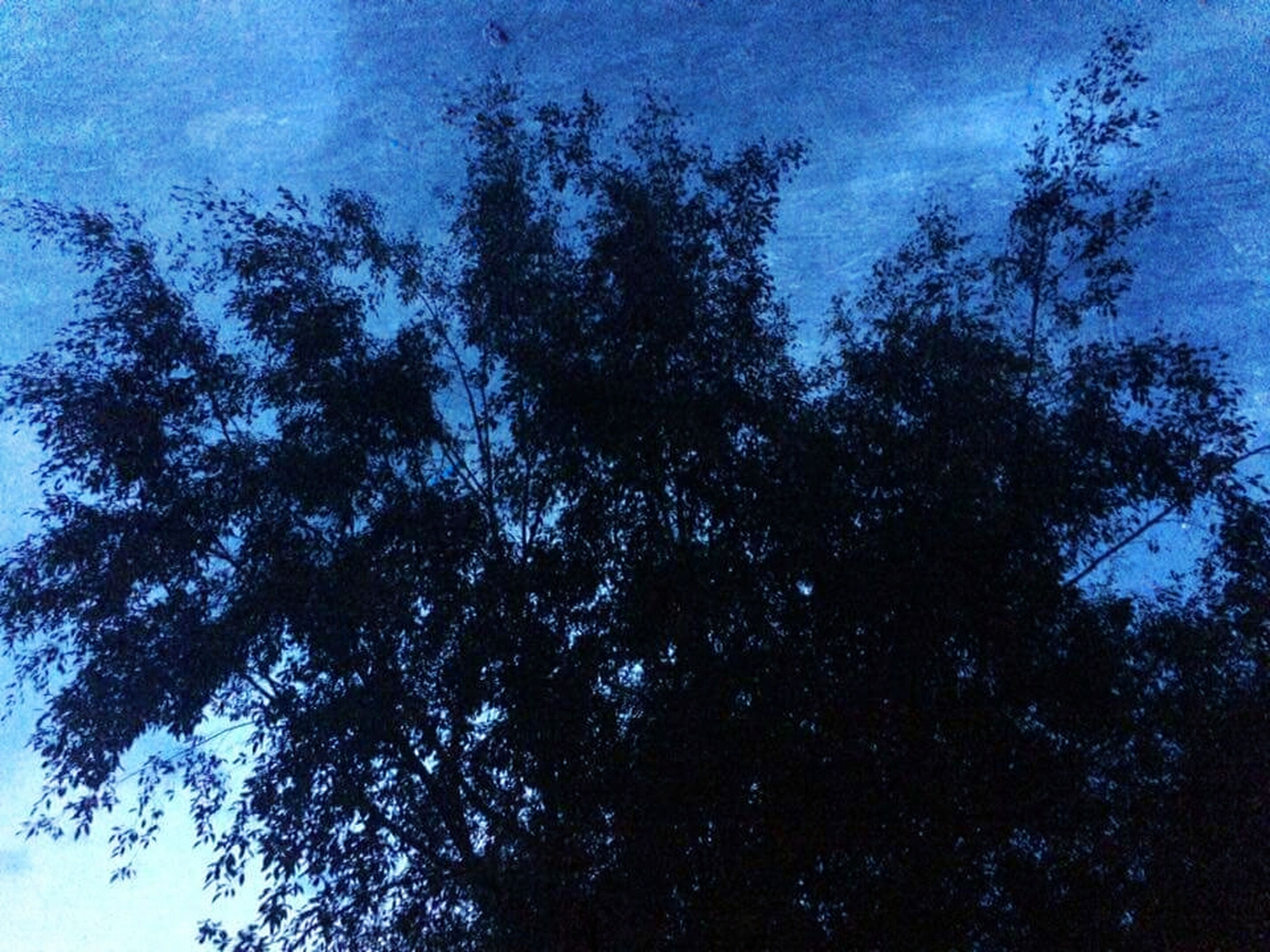 tree, low angle view, sky, blue, tranquility, growth, nature, beauty in nature, branch, scenics, tranquil scene, cloud - sky, silhouette, outdoors, no people, day, cloud, backgrounds, idyllic, high section