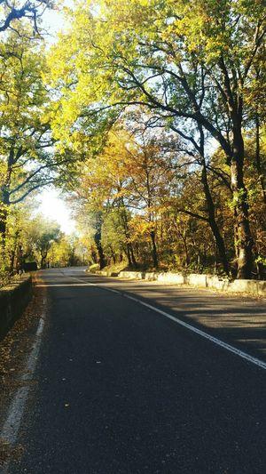 🌲🍁🍃🍀 Autumn Colors Of Autumn Photo First Eyeem Photo Trees Italy