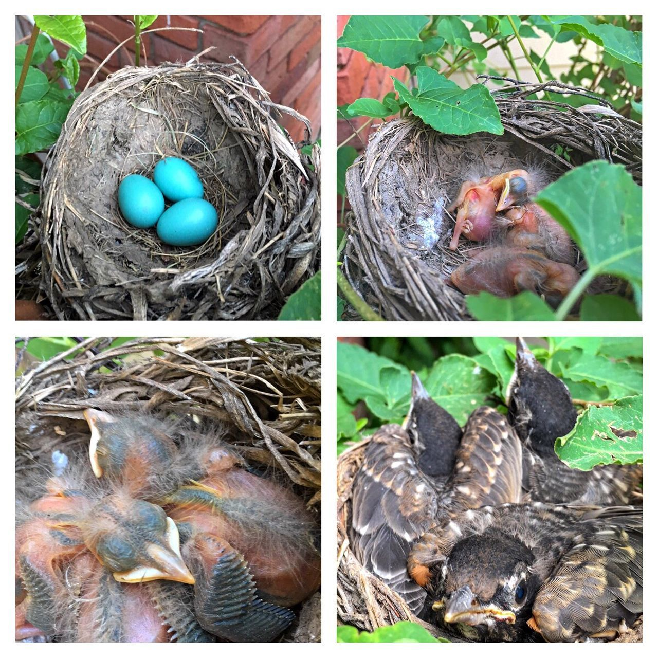 collage, no people, bird nest, animal themes, young animal, leaf, day, close-up, outdoors, nature, bird