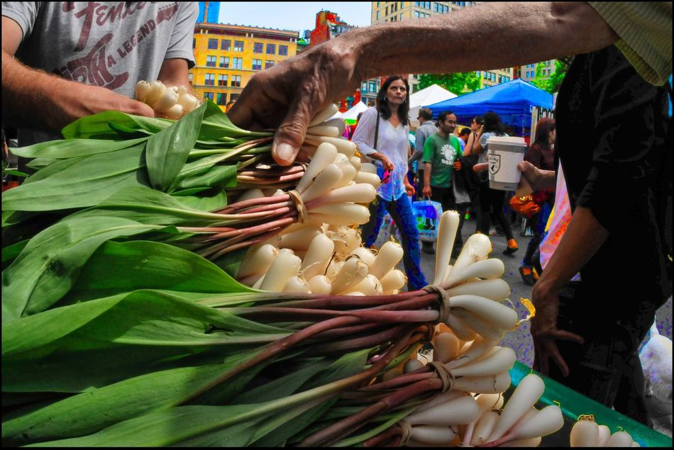 Wild Ramps git em while you can - 5/14/16 As I Sees It Creative Selections & Adjustments W/ Ps CC2016 EyeEm Best Edits EyeEm Best Shots Food For Sale Fresh on Market May 2016 Large Group Of Objects Malephotographerofthemont Market Stall The Photojournalist - 2016 EyeEm Awards The Photojournalist – 2016 EyeEm Awards The Street Photographer - 2016 EyeEm Awards When The Light Catches My Attention